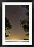Framed Orion constellation between trees, Buenos Aires, Argentina