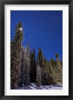 Framed Orion constellation above winter pine trees in Alberta, Canada
