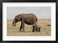 Framed African Elephant With Baby, Maasai Mara Game Reserve, Kenya