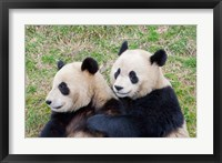 Framed Giant Panda, China