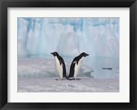 Framed Two Adelie Penguins, Antartica