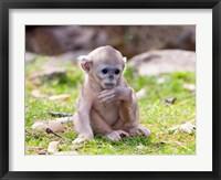 Framed Golden Monkeys, China