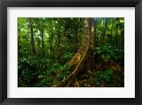Framed Forest scene in Masoala National Park