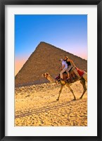 Framed Camel ride, Great Pyramids, Cairo, Giza Plateau, Egypt