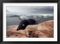Framed Adelie penguin, Western Antarctic Peninsula