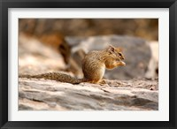 Framed Africa. Tree Squirrel feeding on the ground