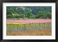 Framed Farmland of Canola and Buckwheat, Bumthang, Bhutan