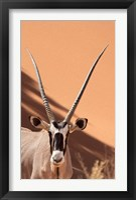 Framed Close-up of Oryx, Namib-Naukluft Park, Namibia, Africa