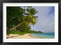 Framed Leaning palm. Anse-Source D'Argent Beach, Seychelles, Africa