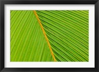 Framed Flora, Palm Frond on Fregate Island, Seychelles