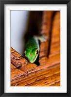 Framed Gecko lizard, Fregate Island Resort, Seychelles