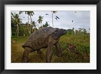 Framed Giant Tortoise, Fregate Island, Seychelles