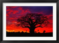 Framed African baobab tree, Tarangire National Park, Tanzania