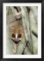Framed Brown Mouse Lemur, tree trunk in Madagascar