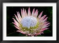 Framed Flowers, Kirstenbosch Gardens, South Africa