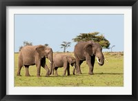 Framed Three African Elephants, Maasai Mara, Kenya