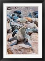 Framed Cape Fur seals, Cape Cross, Skeleton Coast, Kaokoland, Namibia.