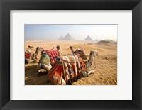 Framed Egypt, Cairo, Camels, desert sands of Giza Pyramids