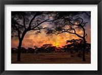 Framed Acacia forest, sunset, Tarangire National Park, Tanzania