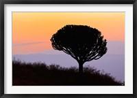 Framed Candelabra Tree, sunrise, Ngorongoro Crater, Tanzania