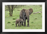 Framed Female African Elephant with baby, Serengeti National Park, Tanzania