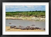 Framed Hippopotamus, Mara River, Serengeti NP, Tanzania