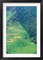 Framed Abutting Agricultural Development, Uganda