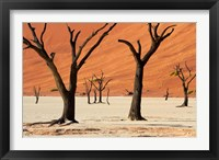 Framed Dead trees with sand dunes, Namibia