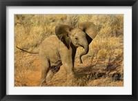 Framed Baby African Elephant, Samburu Game Reserve, Kenya