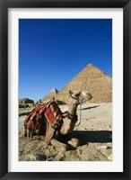 Framed Camel at Cheops, The Great Pyramid, Khafre or Chephren