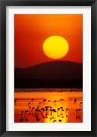 Framed Flock of Lesser Flamingos Reflected in Water at Sunrise, Amboseli National Park, Kenya