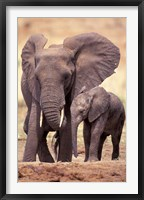 Framed African Elephants, Tarangire National Park, Tanzania