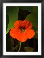 Framed Africa, Malawi, Zomba, Flower at Hotel Sunbird Ku Chawe