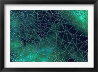 Framed Dew Drops on Spider Web