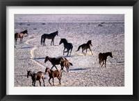Framed Herd of Wild Horses, Namib Naukluft National Park, Namibia