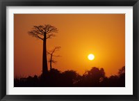 Framed Baobab Avenue at Sunset, Madagascar
