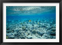 Framed Crystal Clear Waters and Sea Life of the Red Sea, Egypt