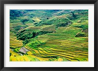 Framed China, Yuanjiang, Cloudy Sea Terrace, Agriculture