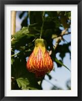 Framed Africa; Malawi; Zomba; Flower at Zomba Mountain Lodge