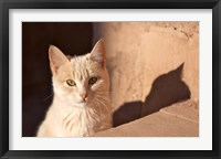 Framed Cat inside kasbah de Taourirt; same clay color!