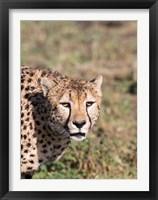 Framed Africa, Tanzania, Serengeti.