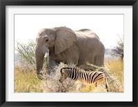 Framed African Elephant and Zebra at Namutoni Resort, Namibia