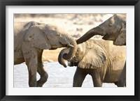 Framed African Elephants at Halali Resort, Namibia