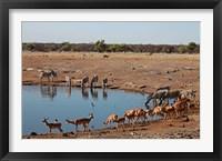 Framed Africa, Namibia, Etosha. Black Faced Impala in Etosha NP.
