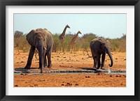 Framed Elephants and giraffes, Etosha, Namibia