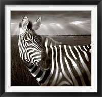 Framed Black & White of Zebra and plain, Kenya