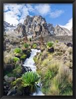 Framed Central Mount Kenya National Park, Kenya