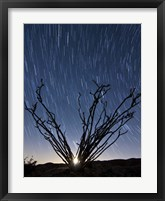 Framed setting moon is visible through the thorny branches on an ocotillo, California