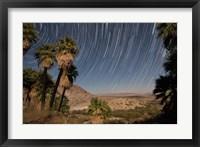 Framed California Fan Palms and a mesquite grove in a desert landscape