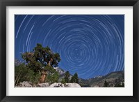 Framed pine tree on a windswept slope reaches skyward towards north facing star trails